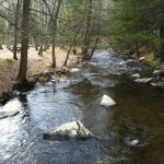 Beaver Brook in Kittatinny Campground